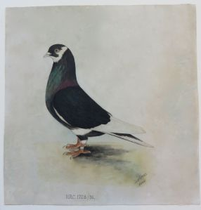 IMG_1769